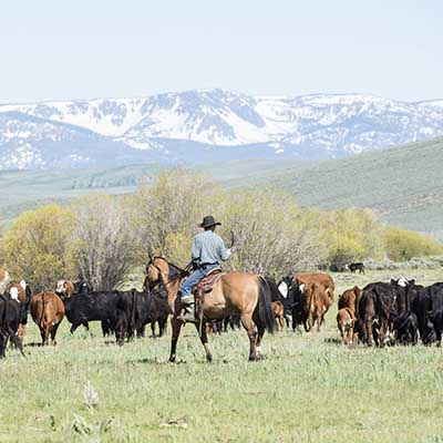 USA - Das Cowboyland