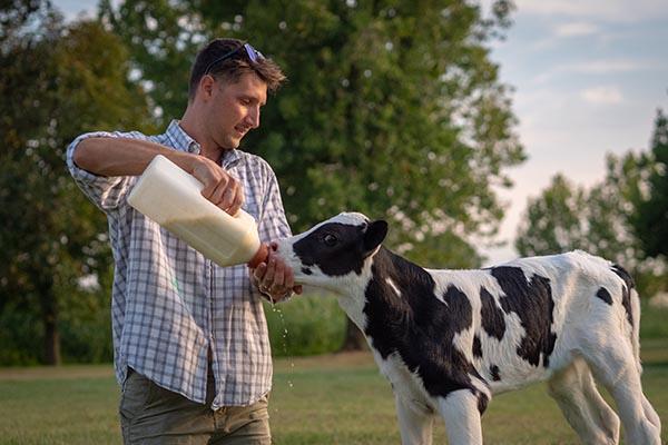 Ein Landwirt füttert ein Kalb mit der Flasche