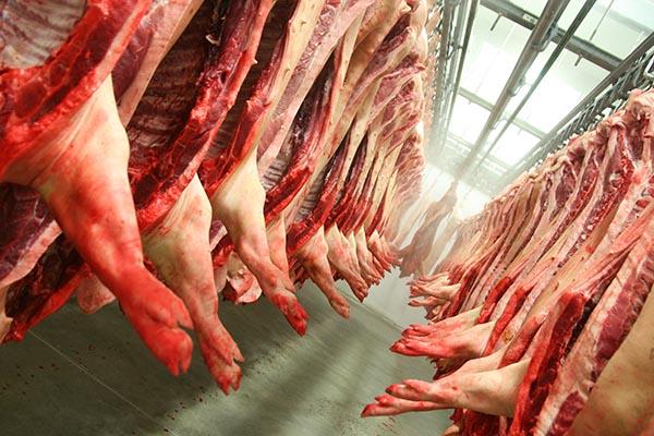 Schweinehälften hängen im Schlachthaus